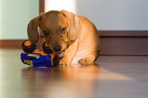 Juguetes hechos en casa para perros energéticos