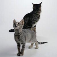 Cómo hacer un gato Aceptar un gatito
