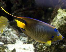 Preguntas para principiantes en acuarios de agua salada