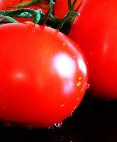 ¿Qué componentes de tomates pueden tratar la intoxicación por alimentos?