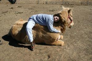 Las causas de la pérdida de peso en un caballo adulto