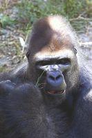 Las desventajas del turismo en Uganda