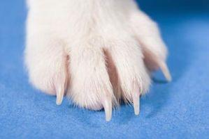 Cómo quitar las manchas de las patas del perro