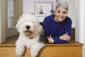 Cómo limpiar el pelo blanco de un perro