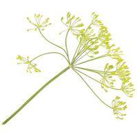 Cómo cocinar con eneldo Weed & Seed