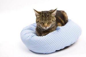 Las convulsiones felinas durante el sueño
