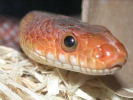 Maneras de matar los ácaros en las serpientes