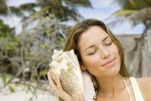 ¿Cómo encontrar conchas marinas en la playa