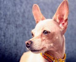 ¿Cómo se regula la clínica de reposo para las Visitas para perros?