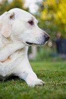 Técnicas de Fotografía de mascotas