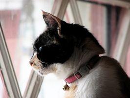 Los diferentes tipos de problemas de salud para los gatos de interior y al aire libre