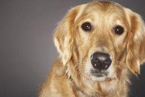 Será la mofeta Ley de aerosol como un elemento disuasorio perro?