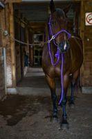 Cómo cortar caucho Suelos para los caballos