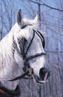 Cómo instalar un bit del caballo en un nupcial