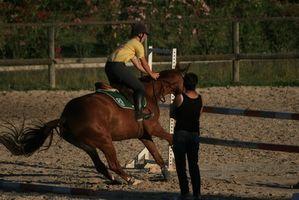 Los ejercicios de entrenamiento para caballos
