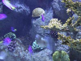 Cómo controlar la alcalinidad en un acuario de arrecife