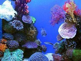 ¿Qué necesita para un acuario de agua salada?