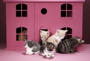 Cómo detener los gatos de Spraying
