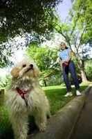 Ventajas y desventajas de los arneses para perros