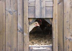 Cómo hacer cajas nido para un gallinero