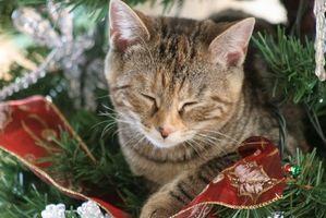 Tutorial para una cama del gato