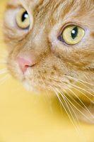 ¿Cómo saber si usted tiene alergias gato