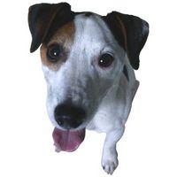 Es la sal de Epsom Bueno para hinchados ojos de un perro?