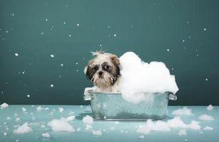 Lo que hay que utilizar para bañar a un perro rociado por una mofeta