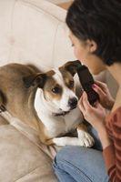 Cómo enseñar a un perro a calmarse cuando suena el teléfono