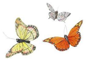 Mariposas que salen del capullo