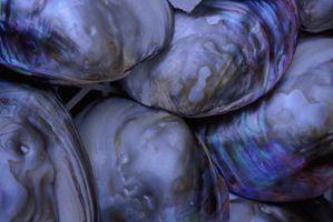 Cómo mantener frescas sin concha ostras