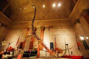 Restaurantes cerca del Museo de Historia Natural en Nueva York