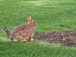 Plant Food para Conejos