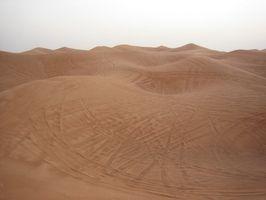 Las plantas raras del desierto de Gobi
