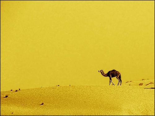 ¿Qué plantas se encuentran en el desierto de Gobi?