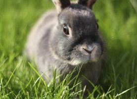 Cómo saber si un conejito está teniendo un ataque?