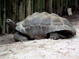 Datos acerca de las tortugas de tierra