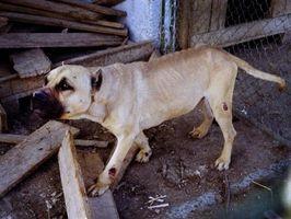 Gold Bond cuerpo de polvo para el tratamiento de los puntos calientes en los perros