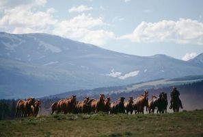 Curas para los problemas respiratorios en los caballos