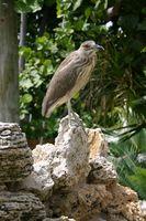 Parques de RV en los Everglades