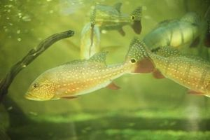 ¿Qué es el mejor filtro hecho en casa por los tanques de peces?