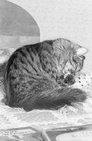 Es detergente para lavar platos malo para la piel de un gato?