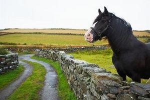 Cómo hacer champú de caballo