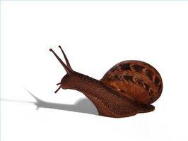 El ciclo de vida de un caracol