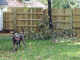 Como prueba del perro una Yard