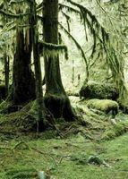Especies de serpientes que se encuentran en la selva tropical