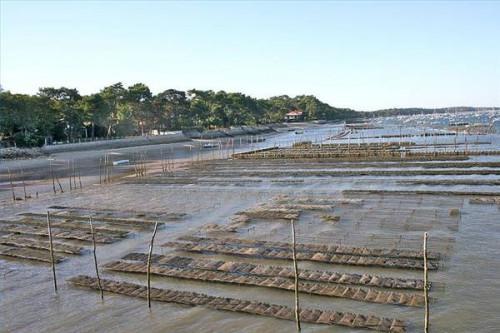 Acerca de ostras