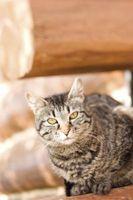 Cómo entrenar a tu gato aseo Con una bandeja de aluminio