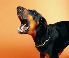 Cómo tratar la agresión del perro