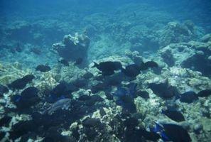 Tipos de Coral